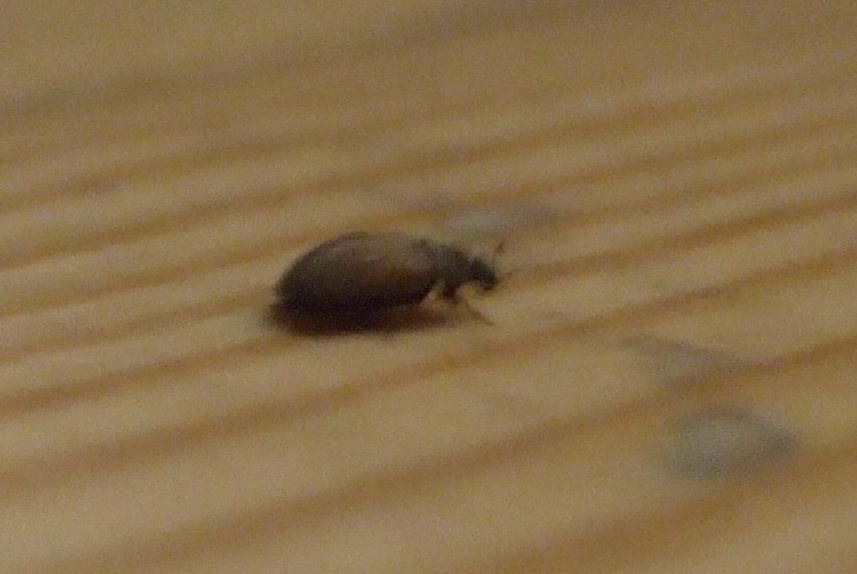 wohnzimmer ideen altbau:käfer im wohnzimmer altbau : Wohnzimmer Ideen für schwarzes Sofa Wie